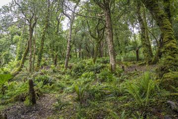 Wandern in einem Farnwald, Irland