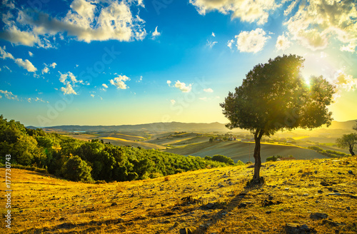 Deurstickers Toscane Tuscany countryside panorama and windy olive tree on sunset. Pisa, Italy