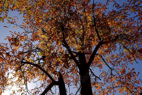 Foto op Canvas Bruin les arbres d'automne, Paris, France