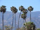 Santa Barbara  - 177748569