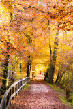 Weg und Jogger im farbigen Herbstwald, Schweiz