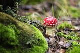 mushroom - 177766186