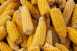 Ripe yellow corn cobs close-up at the farmers market of Iowa United States.