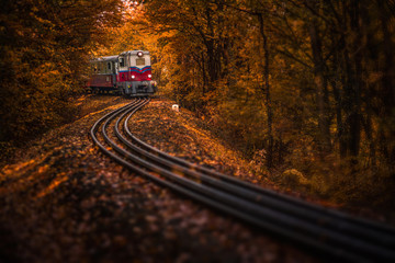 Budapest, Hungary - Beautiful autumn forest with foliage and old colorful train on the track in Hungarian woods