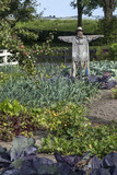Scarecrow in a vegetable patch poster