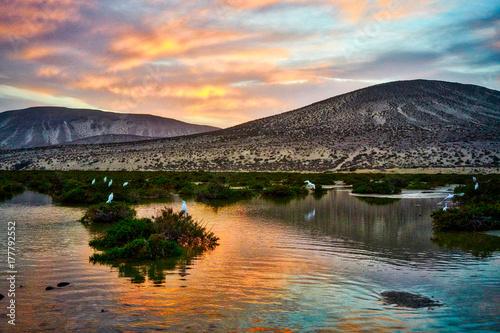 Foto op Canvas Canarische Eilanden Typical landscape of Fuerteventura island