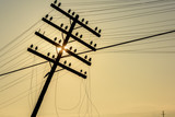 Image of the old telegraph pole. Old wooden pillar with power line in sunrise.    - 177818383