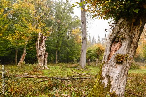 Fotobehang Betoverde Bos Bäume in einem Urwald in Niedersachsen