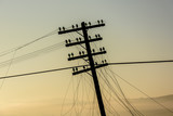 Image of the old telegraph pole. Old wooden pillar with power line in sunrise.    - 177818516