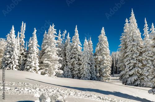 Papiers peints Bleu nuit Bright winter day