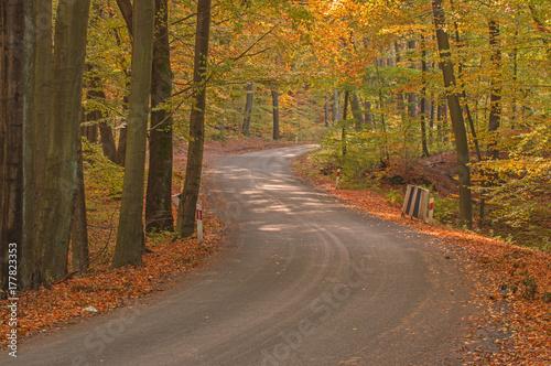 Aluminium Weg in bos Las jesienią.