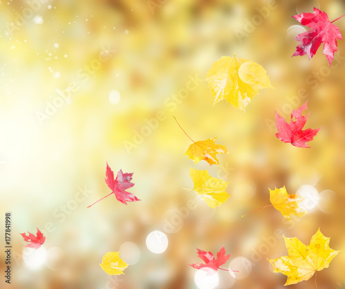 Poster Zwavel geel Fresh red and yellow fall foliage leaves on background with sunshine and copy space