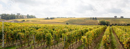 Papiers peints Miel Panorama french vineyards landscape on the vines near Bordeaux in France Europe