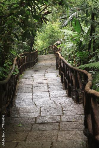 Naklejka Trail into forest in Costa Rica