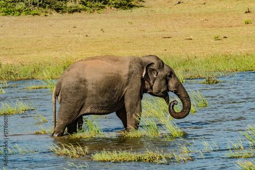 Elephant in the wild Poster