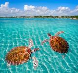 Akumal beach turtles photomount Riviera Maya - 177875114
