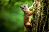 Squirrel - 177877556