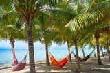 Cozumel island beach palm tree hammocks - 177882196