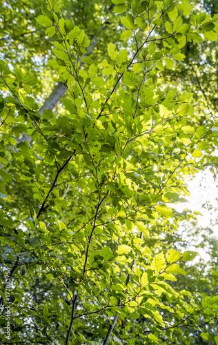 Poster Water planten sunny illuminated green foliage