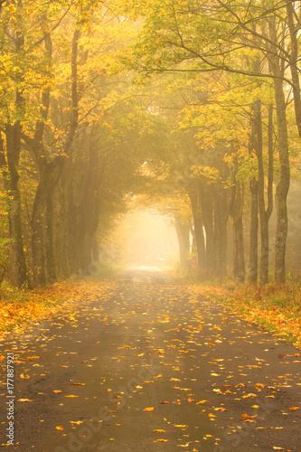 Fotobehang Herfst Autumn Misty Road.
