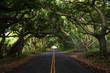 The jungle of Maui Island along the famous road to Hana. Hawaii. USA