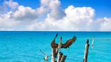 Isla Mujeres island Caribbean beach birds - 177889300