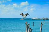 Isla Mujeres island Caribbean beach birds - 177889311
