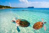 Mahahual Caribbean beach turtle photomount - 177889999