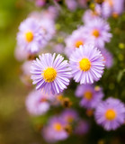 beautiful violet flower in nature - 177898714