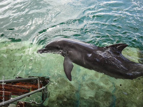 Papiers peints Bali Penguin Island western Australia