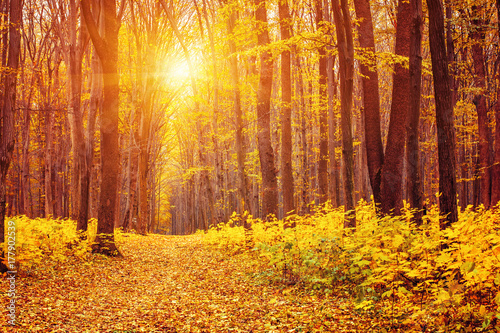 Papiers peints Brique Photo of orange autumn forest with leaves and road