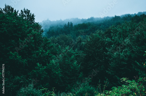 mountain forest in the clouds - 177914376