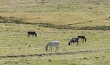 Cavalli al pascolo 145