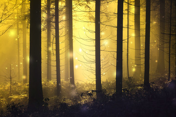 Fantasy firefly lights in the magic fairy tale foggy forest. © robsonphoto