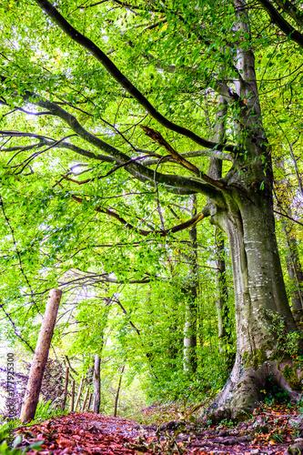 Fotobehang Lime groen footpath