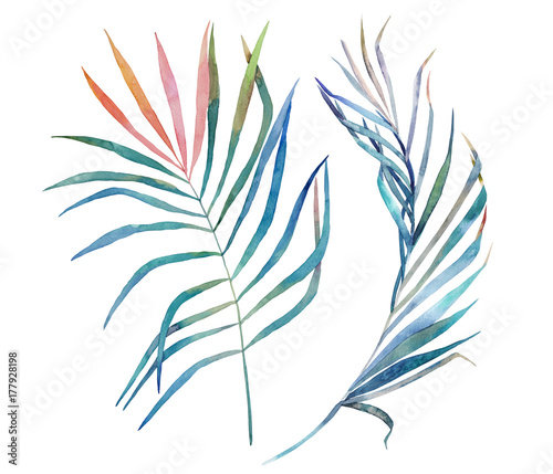 Watercolor tropical leaves on white background. Hand drawn illustration