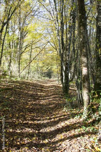 Papiers peints Route dans la forêt chemin de randonnée en sous bois automne
