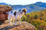 Dog looking at mountains panorama view from high rock