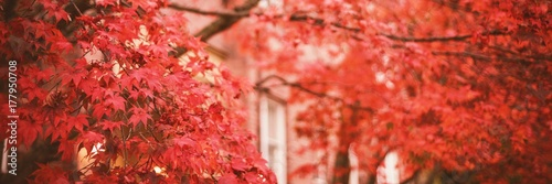 Low angle view of autumn maple tree - 177950708