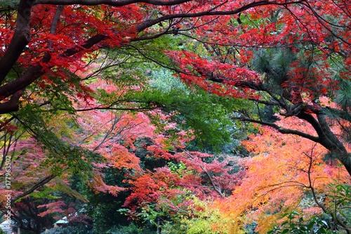 Fotobehang Tokio Shinjuku Gyoen park