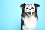 Schwarz weisser Hund mit Verkleidung - 177966919