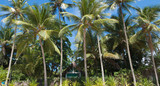 Green house in the middle of palm trees in tropical island - 177988555