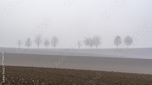Silhouetten im Nebel   - Silhouettes - 177994796