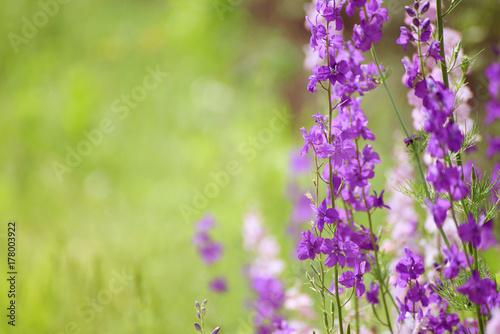 Background from tender soft violet blue beautiful flowers, floral vintage backgr Plakat