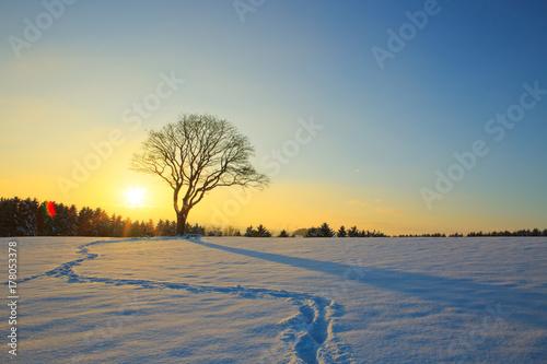 Fotobehang Donkergrijs Winter sunset landscape with tree.