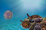 Two green sea turtles underwater - 178054179