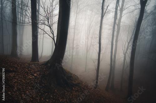 Poster dark misty forest background