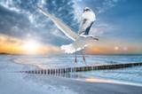 Ostsee Sonnenuntergang - 178092527
