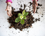 A child planting a tree