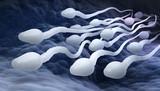 Male sperm cells - 178100368